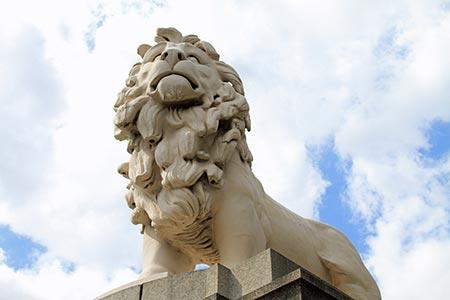 lion-shot